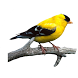Bird Calls And Ringtones by Wizitech
