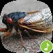 Appp.io - Cicada Sounds by Appp.io