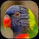 أروع أصوات الطيور by soula developer