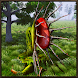 Pitcher Plant Simulator by Yamtar Games