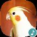 Appp.io - Cockatiel Sounds by Appp.io