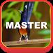 Kicau Murai Batu Mp3 dan Video by Queen Master Apps