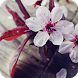 Cherry Blossom Wallpaper by WallpapersCompany
