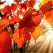 autumn free wallpaper by Dark cool wallpaper llc