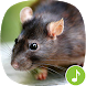 Appp.io - Mouse and Rat sounds