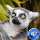 Lemur Sounds Ringtones by msd developer multimedia
