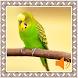 Canary Birds Sounds