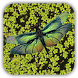 Dragonfly Live Wallpaper by alphaism