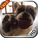 Dog Licking Screen Video LWP by CharlyK LWP