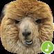 Appp.io - Alpaca Sounds by Appp.io
