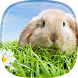 Rabbit Live Wallpaper by HAPPY, INC.