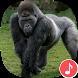 Appp.io - Gorilla sounds by Appp.io
