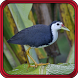 Suara Burung Ruak Ruak Terbaru Offline by speed apps