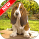 Basset Hounds Wallpapers by Fresh Wallpapers