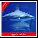 لعبة الحوت الأزرق الأصلية by kl plus