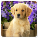 Puppy Live Wallpaper by Art LWP