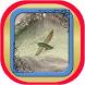 Fly Fishing Apps by Wijaya Kusuma