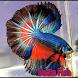 Betta fish by raradroid