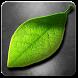 Fresh Leaves by maxelus.net