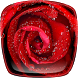 Rain on Rose Live Wallpaper by Cute Live Wallpapers And Backgrounds