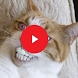 Funny Cat Videos by Entertainment Apps©