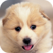 Puppy Weather Forecast Widget Radar map Monster by Better Weather Widget Monster Team