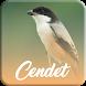 Master Kicau Cendet Offline by dwipdev