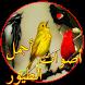 اصوات الطيور بدون نت by saad developper