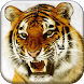 Bengal Tiger Live Wallpaper by Cicmilic Soft