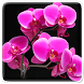 Orchid Live Wallpaper by Art LWP