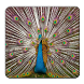Peacock Wallpapers by Blue Star Team