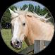Funny Horse Farm Sounds by Triple Obelisk