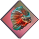 Betta Fish Species by App orbit