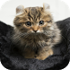 Wirehair Cat Wallpapers by Laland Apps