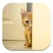 Stalker Cat Live Wallpapers by GL Live Wallpapers