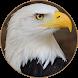 Bald Eagle Sounds by BirdDev