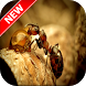 Ant Wallpapers by Fresh Wallpapers