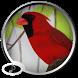 Birds Sounds by UltimateRingtones