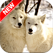 Arctic Wolf Wallpapers by Fresh Wallpapers