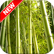 Bamboo Wallpapers by Fresh Wallpapers