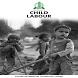 Child Labour by Punjab IT Board