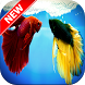 Betta Fish Wallpapers by Fresh Wallpapers