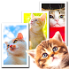 Wallpaper Cat Collection by peso.apps.pub.arts