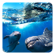 Dolphin 3D Live Wallpaper by Live Wallpapers Ultra