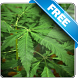Marijuana Free live wallpaper by Infomedia BH