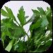 فوائد الأعشاب by DevMobilePro