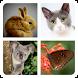Угадай Животных by Friz PRO