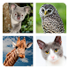 Guess the Animal by Friz PRO