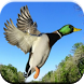 Duck Hunting Calls by Best Ringtones For Everyone