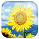 Sunflower Live Wallpaper by Wasabi